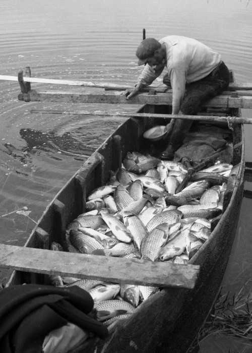Ψαριά στην Λίμνη Κάρλα, 1953.