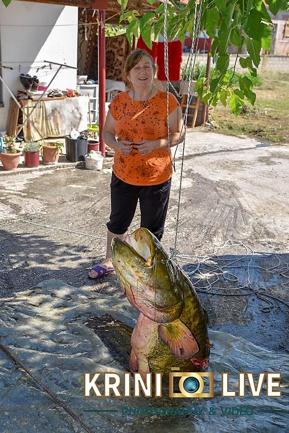 DSC5864 - Ψάρι 35 κιλών «έβγαλε» Ιερέας στον Πηνειό ποταμό