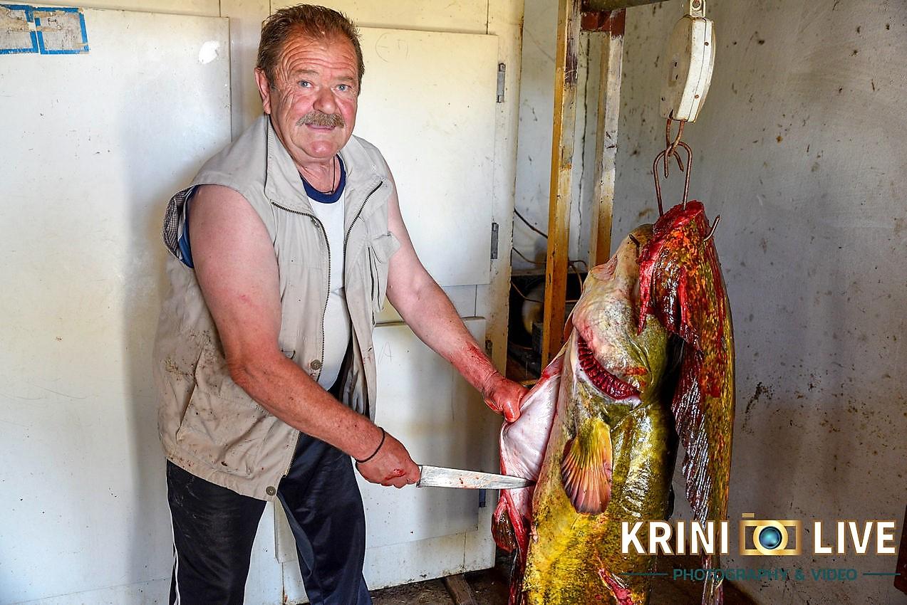 DSC5983 - Ψάρι 35 κιλών «έβγαλε» Ιερέας στον Πηνειό ποταμό